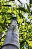 Bamboo, looking up 04 Royalty Free Stock Photos