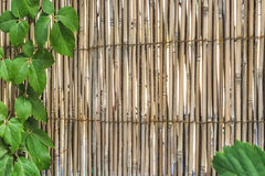 Bamboo material wall framed with green leafs Stock Photos