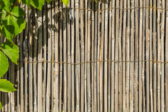 Bamboo material wall framed with green leafs Royalty Free Stock Photo
