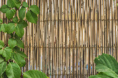 Bamboo material wall framed with green leafs Royalty Free Stock Photos