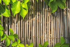 Bamboo material wall framed with green leafs Stock Image