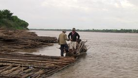 Bamboo, mekong , cambodia, southeast asia stock video