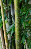 Bamboo Messages Stock Images