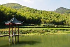 Bamboo mountain. Green bamboo mountain near a lake Royalty Free Stock Images