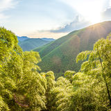 Bamboo and mountains in sunset Stock Photography