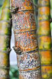 Bamboo with name carvings Royalty Free Stock Photos