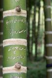 Bamboo with names Stock Photo