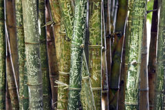 Bamboo with names and graffiti Royalty Free Stock Photo