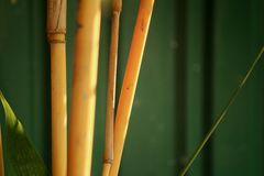 Bamboo in a nature at the forest Stock Images