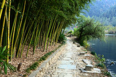 Bamboo near the river Stock Photo