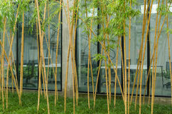 Bamboo office area Stock Image