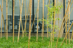 Bamboo office area Stock Photography