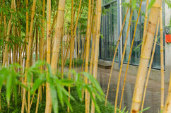 Bamboo office area Royalty Free Stock Photography