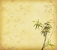 Bamboo on old grunge antique paper Royalty Free Stock Photography