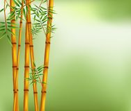 Bamboo on old grunge green and white texture background Royalty Free Stock Photos