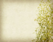 Bamboo on old grunge paper background Royalty Free Stock Images
