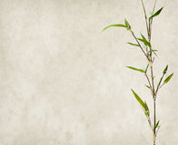 Bamboo on old grunge paper background Royalty Free Stock Photos