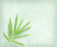 Bamboo on old grunge paper background Stock Images