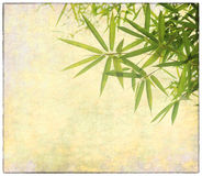 Bamboo on old grunge paper texture Stock Image