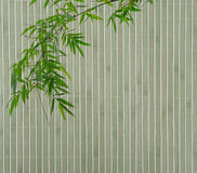 Bamboo on old grunge paper texture Stock Photo