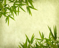 Bamboo on old grunge paper texture. Background Stock Photos