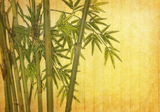 Bamboo on old grunge paper texture Royalty Free Stock Images