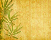 Bamboo on old grunge paper texture Royalty Free Stock Photography