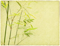 Bamboo on old grunge paper texture Stock Photography