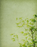 Bamboo on old grunge paper Stock Photo