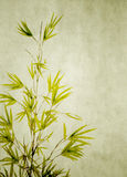 Bamboo on old grunge paper texture. Background Stock Images