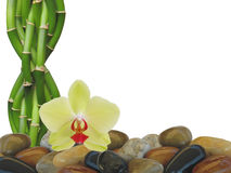 Bamboo orchid and Zen rocks Background Royalty Free Stock Image