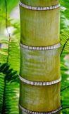 Bamboo Palm Tree Stem Royalty Free Stock Photos