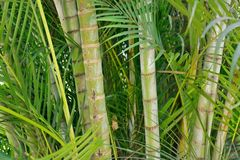 Bamboo and palm trees Stock Photos