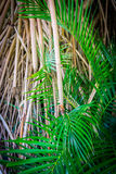 Bamboo and Palms Stock Image