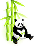 Bamboo and panda Stock Photography