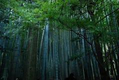Bamboo park. A bamboo park in Hokokuji Temple in Kamakura city, Japan Stock Image