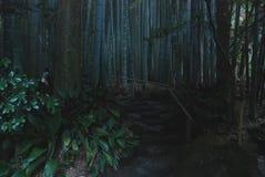 Magic bamboo forest. A bamboo park in Hokokuji Temple in Kamakura city, Japan Royalty Free Stock Photo