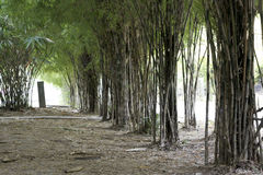 Bamboo park Royalty Free Stock Photo