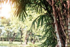 Bamboo in the park. Royalty Free Stock Photos