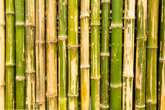 Bamboo partition Royalty Free Stock Images
