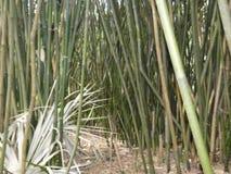 Bamboo Royalty Free Stock Photos