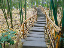 Bamboo path. Path in lush bamboo forest,in chengdu,china Royalty Free Stock Images