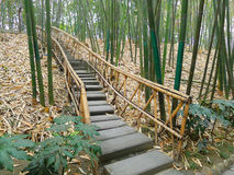 Bamboo path. Path in lush bamboo forest,in chengdu,china Royalty Free Stock Photography