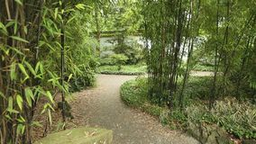 Bamboo Path dolly shot Royalty Free Stock Photos