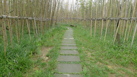 Bamboo path Royalty Free Stock Images