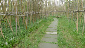 Bamboo path Stock Image