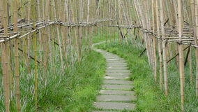 Bamboo path Stock Images