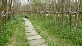 Bamboo path Stock Photo