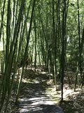 Bamboo pathway Royalty Free Stock Photo