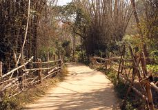 Bamboo Pathway through Kuruva Island Stock Photography